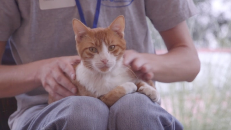 The University of York in the UK published a recent study about pets and your mental health.