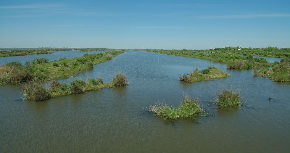 Three floating islands mats installed by CCA in 2011 have now become part of the marsh in...