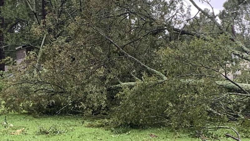 Hurricane Ida knocked down many trees in Prairieville, La.