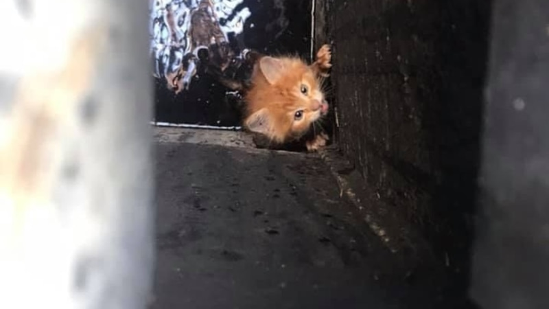 Pennywise was rescued by the SPCA and NOFD.