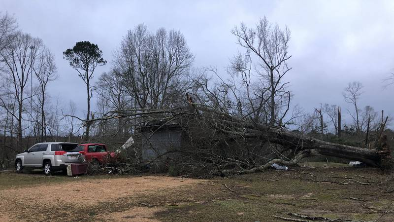 Damage left behind by strong storms and a possible tornado in Amite County, MS. Several people...