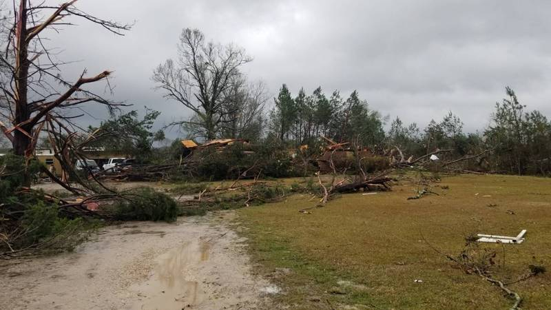 Severe weather knocked down trees and power lines Monday on Borel Road.