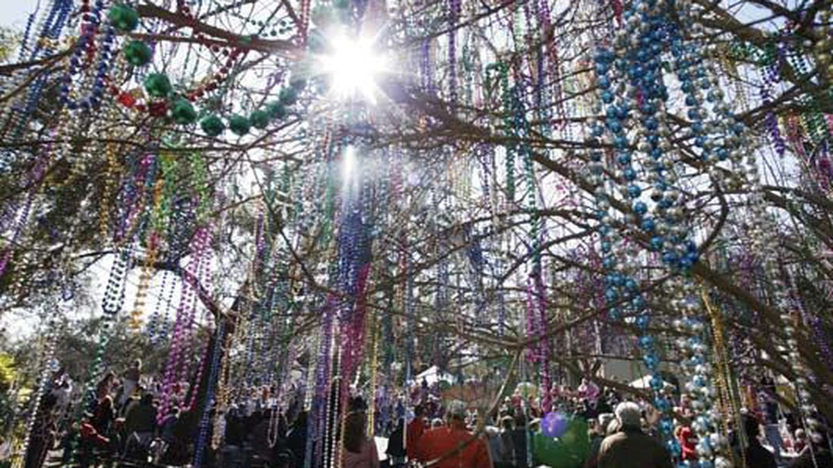 Strands of Mardi Gras beads hang from the branches of a tree along Napoleon Avenue in the...