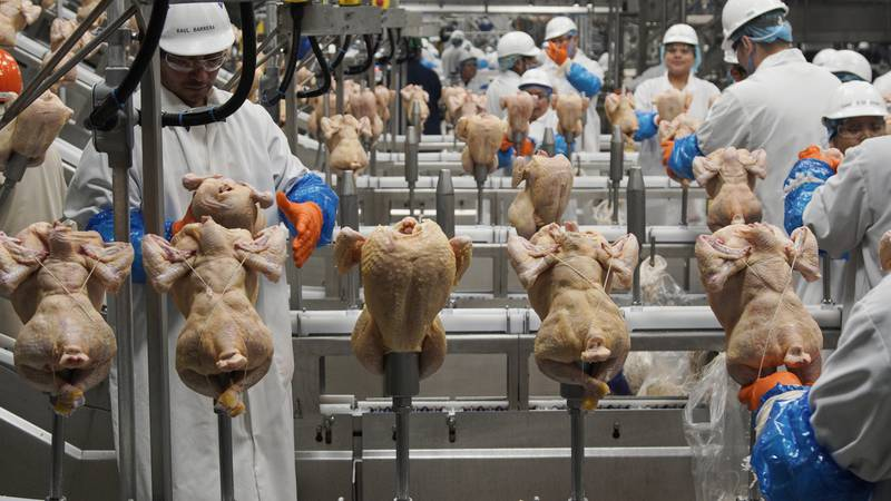 FILE - In this Dec. 12, 2019, file photo workers process chickens at a poultry plant, in...