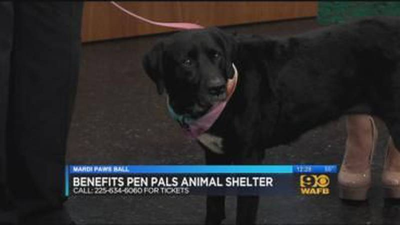 Pen Pals Animal Shelter: January 4