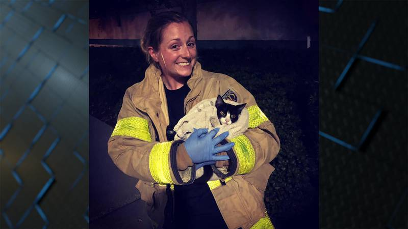 St. George firefighter rescues kitten from drain