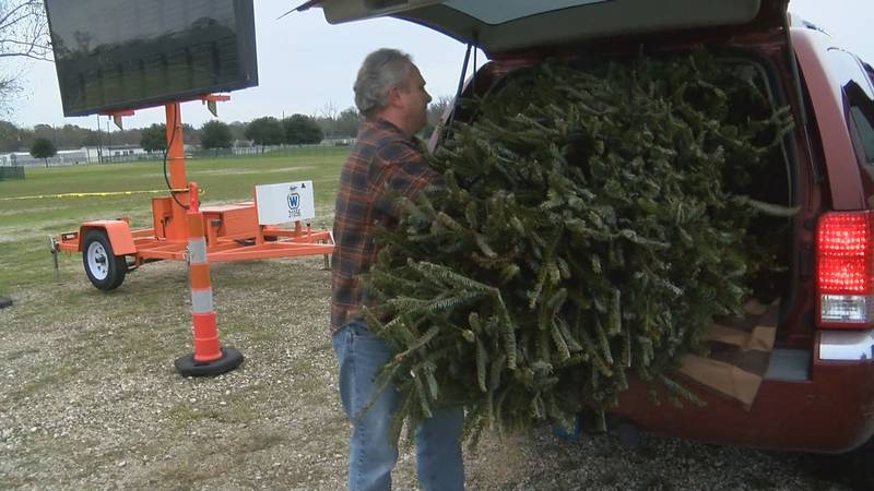 People are being encouraged to recycle their Christmas trees.