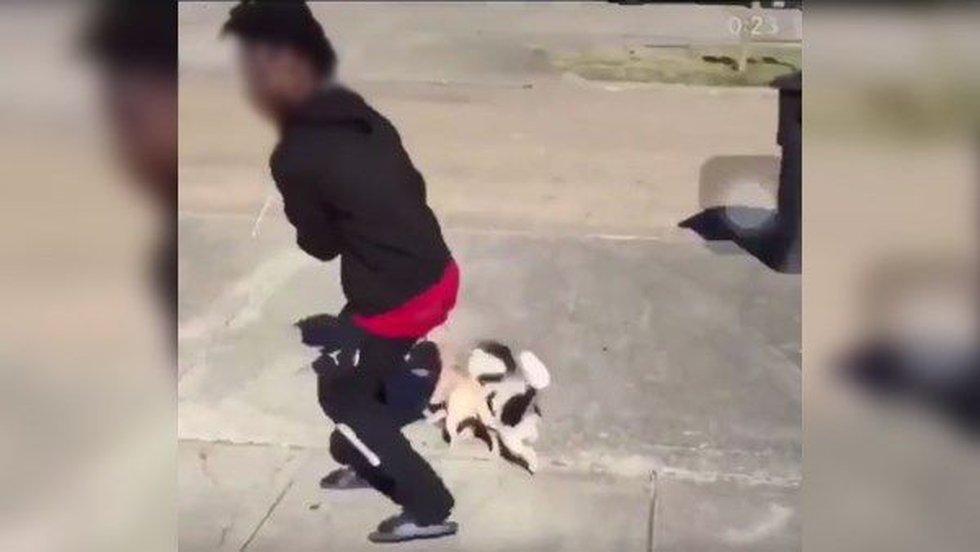 Screen shot of alleged animal cruelty video (Source: Twitter)