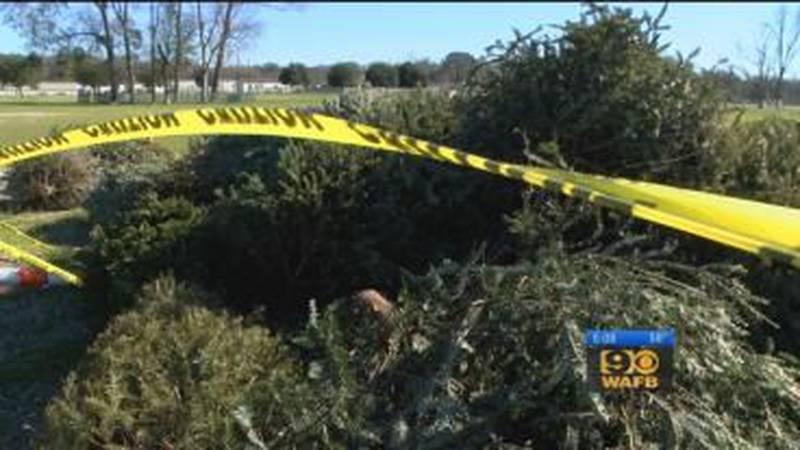 Christmas tree drop-off site in Ascension Parish underway