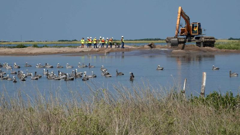 Pelicans near heavy equipment used in the Queen Bess Island restoration