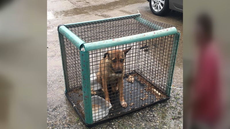 Many pets are being illegally dropped off at an animal shelter in Denham Springs