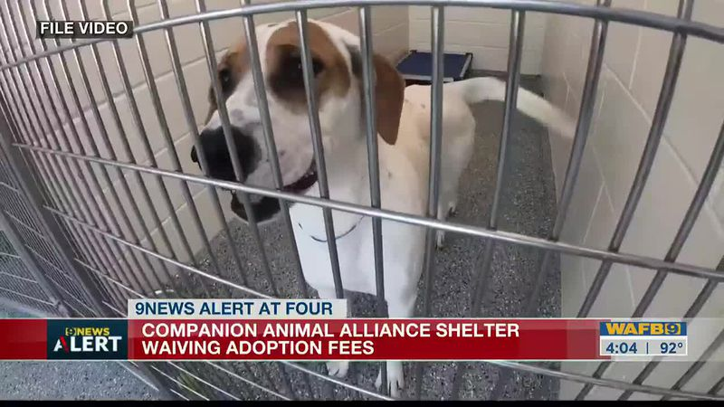 Companion Animal Alliance waives adoption fees in Clear The Shelter event