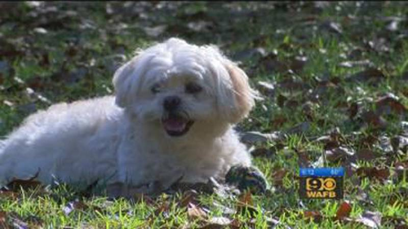 Family dog saves elderly Walker woman from house fire