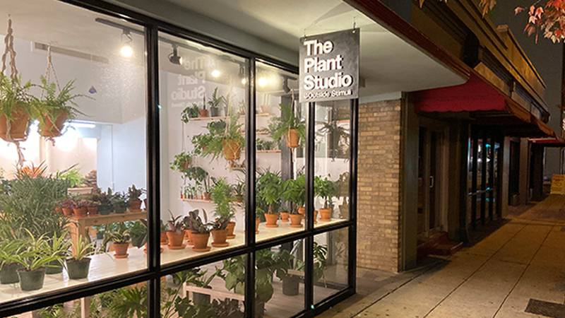 The small business offers a variety of indoor plants.