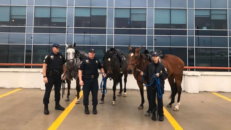 Members of BRPD's mounted patrol   visits injured Officer Derrick Maglone outside of Our Lady...