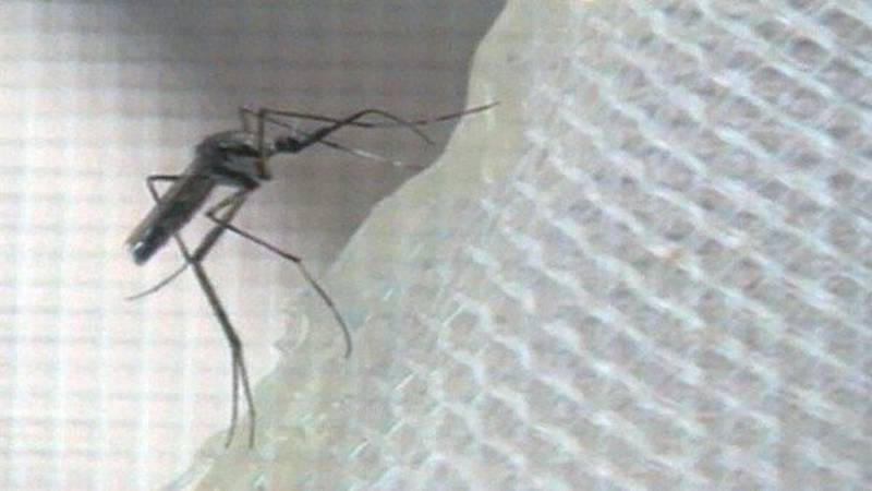 Mosquito (Source: WAFB)